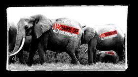 HandsOffOurElephants