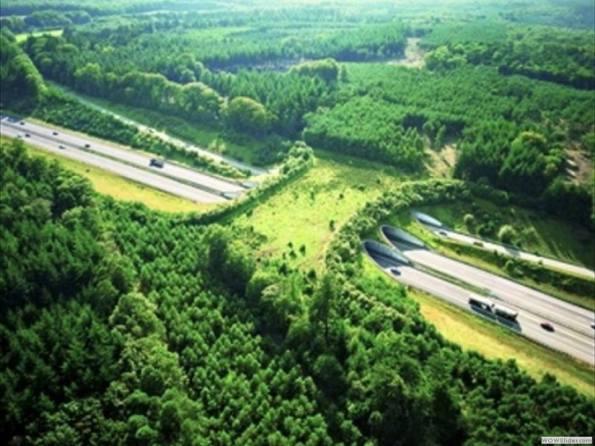 Netherlands wildlife crossing