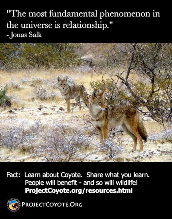Message Monday - Coyotes
