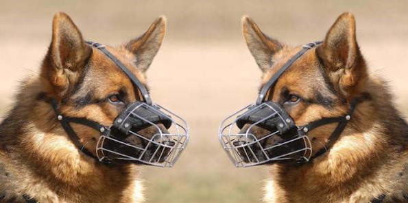 dogs wmetal halter