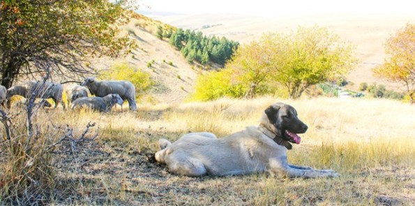 feature_conservation_dogs_main3-760x378