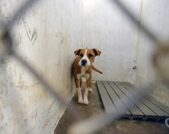 A dog at the Calhoun County Animal Control Center in 2014. The city of Heflin contracts with the center to shelter pets picked up by the city's animal control officer.